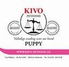 Kivo Puppy compleet (Nieuw) 40 x 250gram